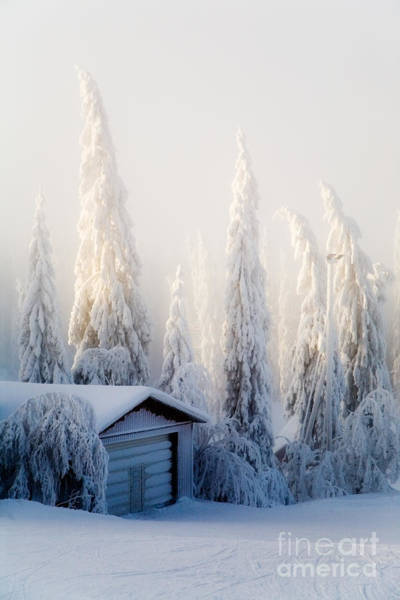 Wall Art - Photograph - Winter Scene by Kati Finell