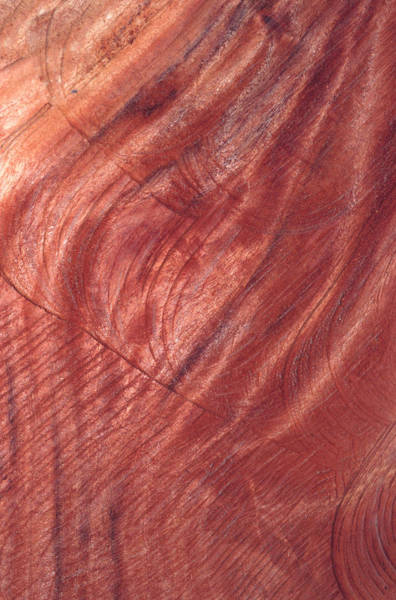 Photograph - Wood Structure by John Foxx