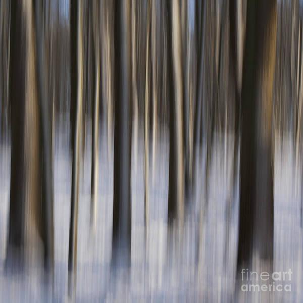 Photograph - Woodland Fantasy by Heiko Koehrer-Wagner