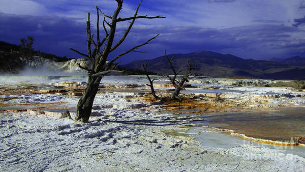 Photograph - Yellowstone National Park 6 by Xueling Zou
