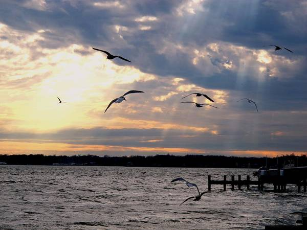 Wall Art - Photograph - Seagulls In Flight by Valia Bradshaw