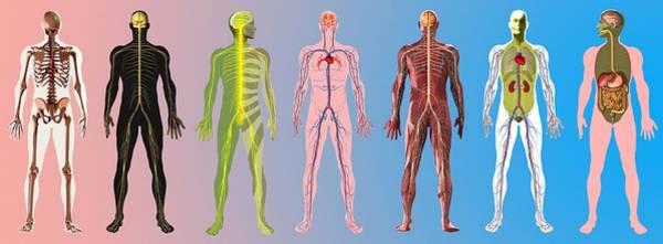 Wall Art - Photograph - Human Anatomy ,artwork by Mehau Kulyk