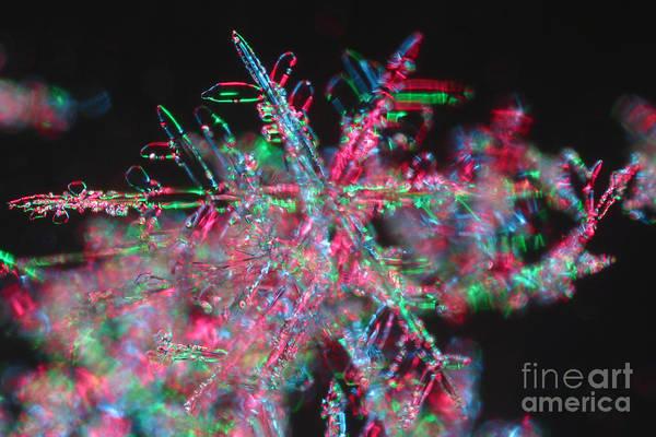 Photograph - Snowflake by Ted Kinsman