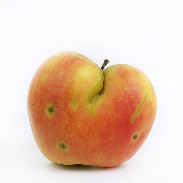 Rosaceae Wall Art - Photograph - Apple by Bernard Jaubert