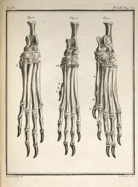 Wall Art - Photograph - 1755 Variation Dog Feet Buffon Evolution by Paul D Stewart