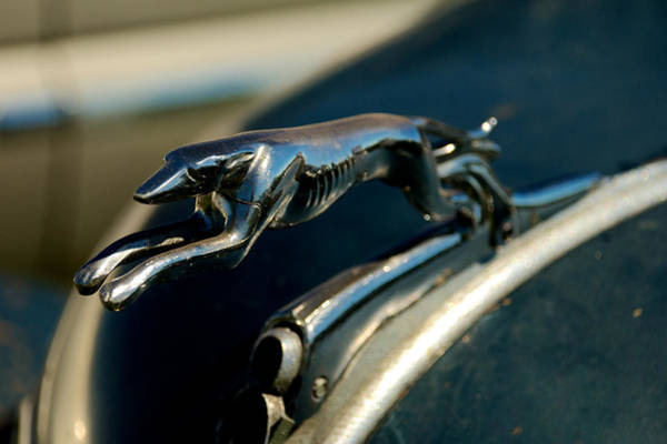 Photograph - 1936 Ford Hood Ornament by Mark Dodd