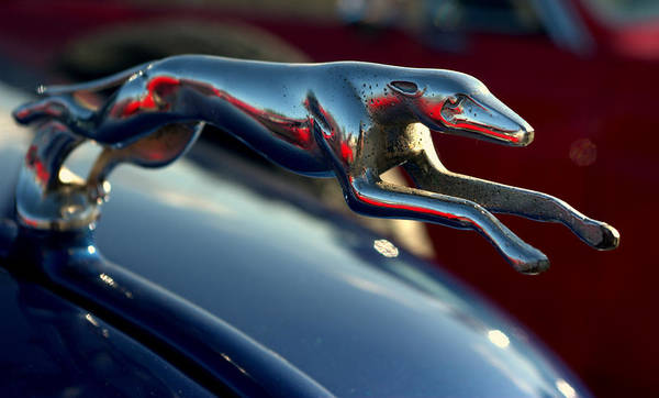 Photograph - 1937 Chevrolet Greyhound Ornament by Tim McCullough