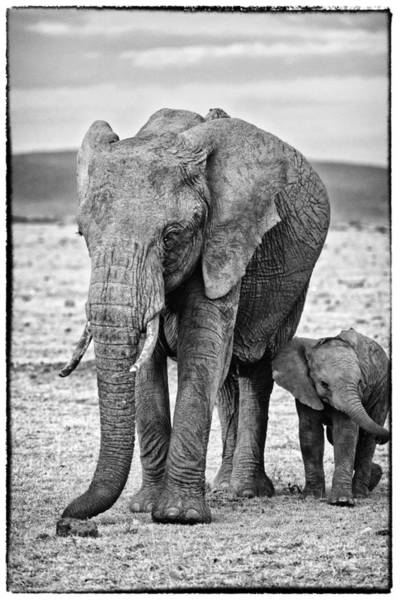 Art Print featuring the photograph African Elephants In The Masai Mara by Perla Copernik
