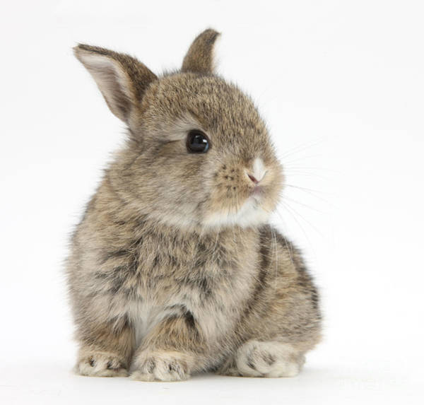 Photograph - Baby Rabbit by Mark Taylor