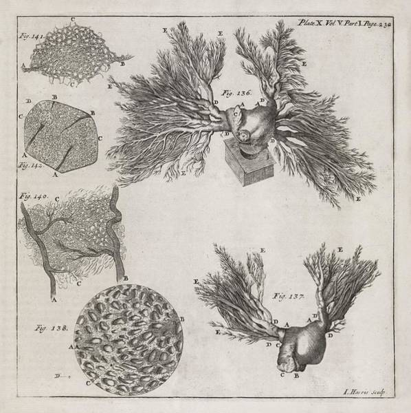 Tissue Paper Photograph - Biological Illustrations, 18th Century by Middle Temple Library