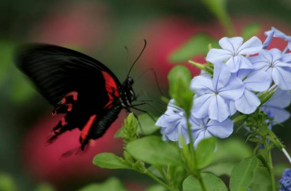 Wall Art - Photograph - Butterfly Beauty by Valia Bradshaw