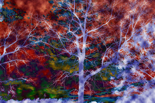 Photograph - Colorful Mystic Trees by Sheila Kay McIntyre