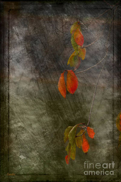 Colours Of Autumn Art Print