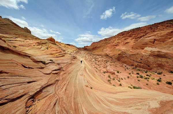 Photograph - Coyote Buttes by David Hogan