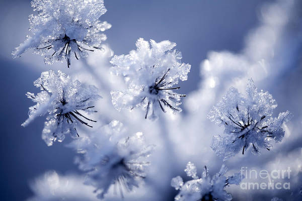 Wall Art - Photograph - Detail Of Frozen Flower by Kati Finell