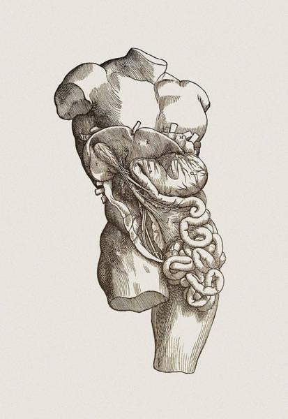 De Humani Corporis Fabrica Photograph - Digestive System by Mehau Kulyk