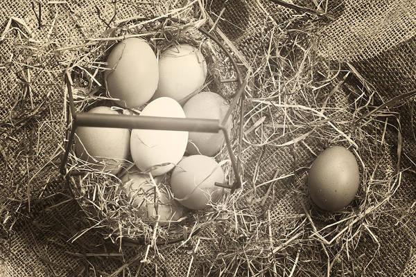 Bauer Photograph - Eggs by Joana Kruse
