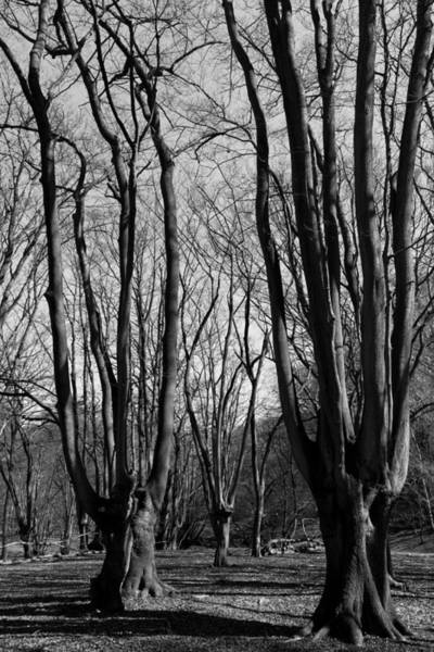 Epping Wall Art - Photograph - Epping Forest by David Pyatt