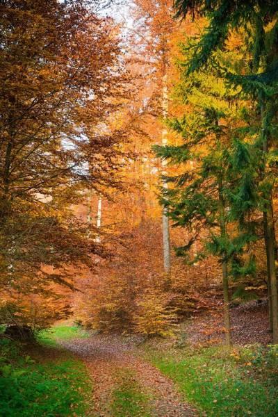 Wall Art - Photograph - Fall Scenery by Maciej Markiewicz