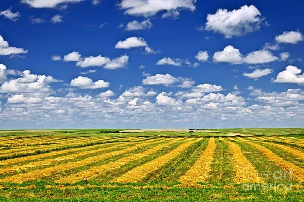 Wall Art - Photograph - Farm Field At Harvest In Saskatchewan by Elena Elisseeva