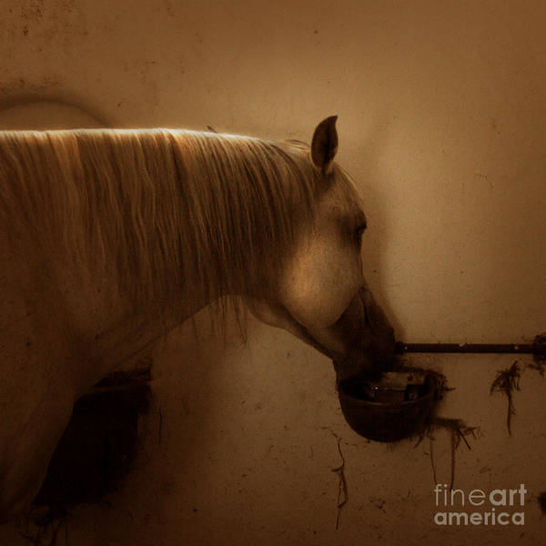 In The Stable Art Print