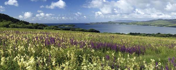 Lythrum Photograph - Isle Of Jura, Scotland by Duncan Shaw