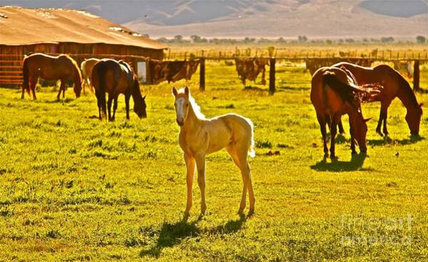 Palomino Photograph - Little Blondie by Gus McCrea