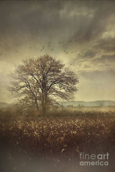 Photograph - Lone Tree In Autumn Farm Field  by Sandra Cunningham