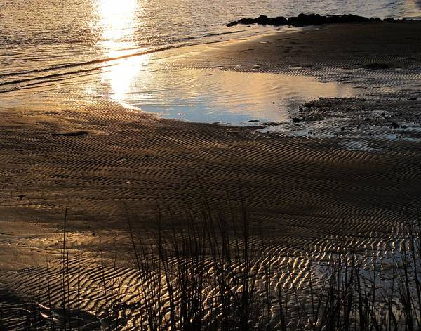 Wall Art - Photograph - Low Tide by Valia Bradshaw
