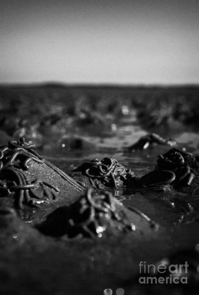 Wall Art - Photograph - Lugworm Arenicola Marina Casts On Mudflats In Strangford Lough County Down Northern Ireland by Joe Fox
