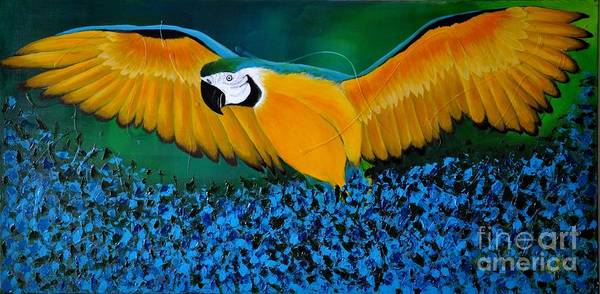 Macaw On The Rise Art Print