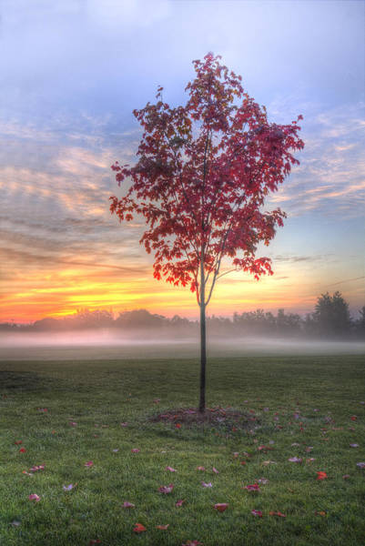 Photograph - Morning Landscape by Nick Mares