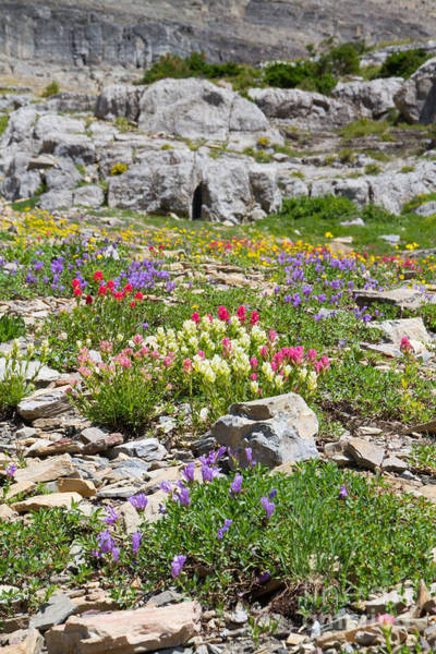 Photograph - Mother Nature's Master Garden by Katie LaSalle-Lowery