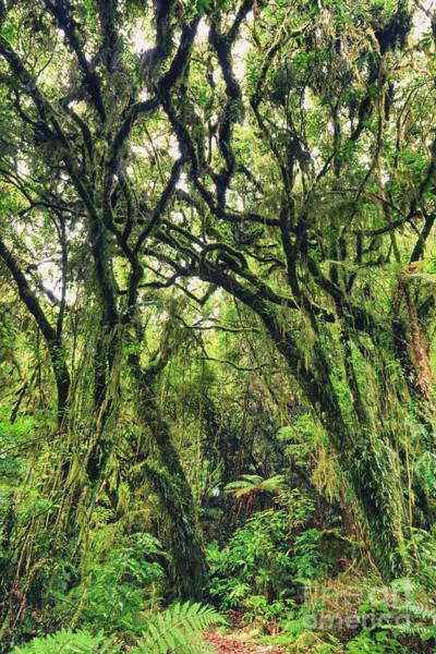 Liane Photograph - Native Bush by MotHaiBaPhoto Prints