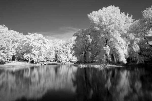 Photograph - Park In Infra Red by Odon Czintos
