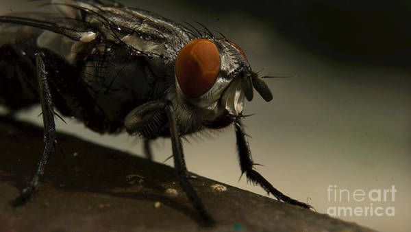 Art Print featuring the photograph Portrait Of A Fly by Mareko Marciniak