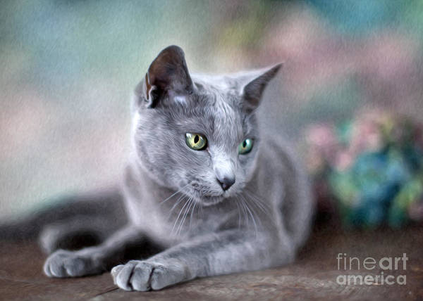Domestic Cat Wall Art - Painting - Russian Blue by Nailia Schwarz