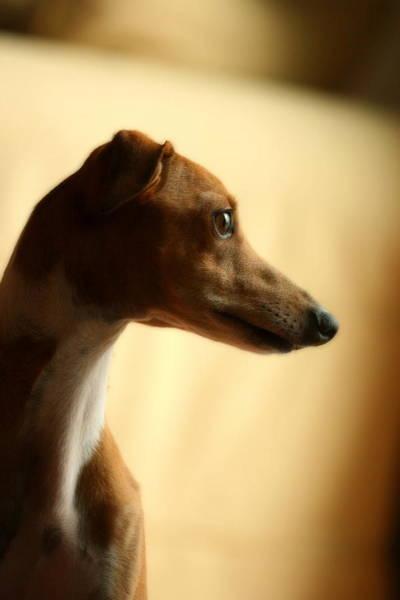 Photograph - Sami by Angela Rath