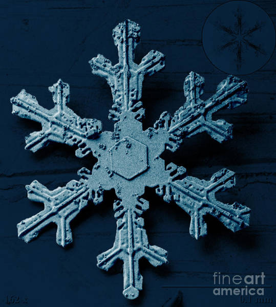 Photograph - Snow Crystal by Science Source