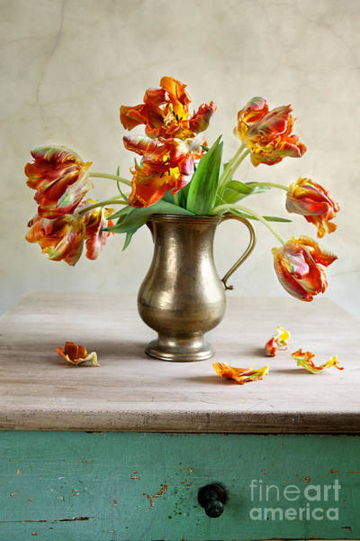 Brass Photograph - Still Life With Tulips by Nailia Schwarz