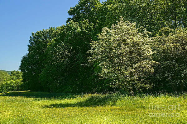 Photograph - Sunny Meadow by Lutz Baar