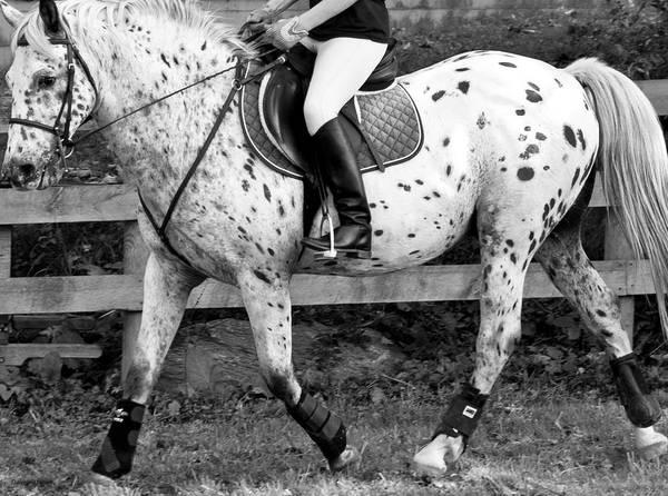 Grey Horse Photograph - 20m Circle At A by Betsy Knapp
