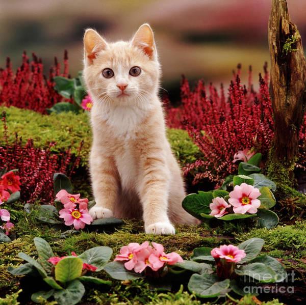 Photograph - Kitten by Jane Burton