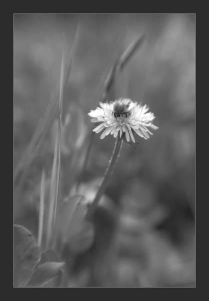 Photograph - Flower by Odon Czintos