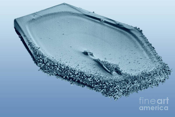Photograph - Snow Crystal by National Snow and Ice Data Center