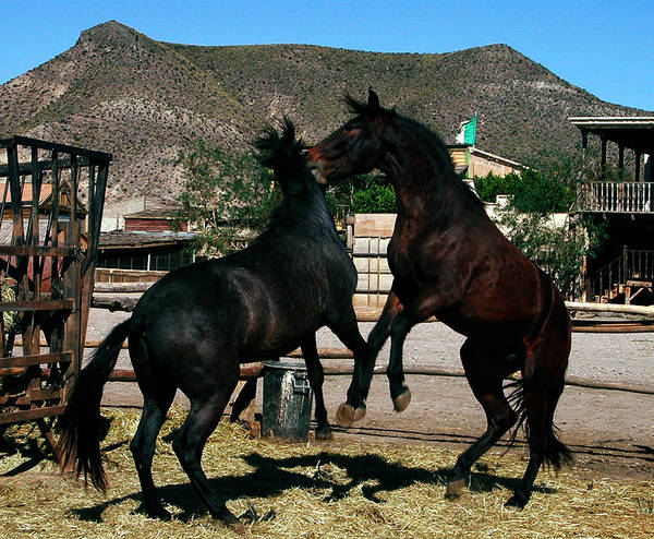 Photograph - 2horses In Love Almeria Spain by Colette V Hera  Guggenheim
