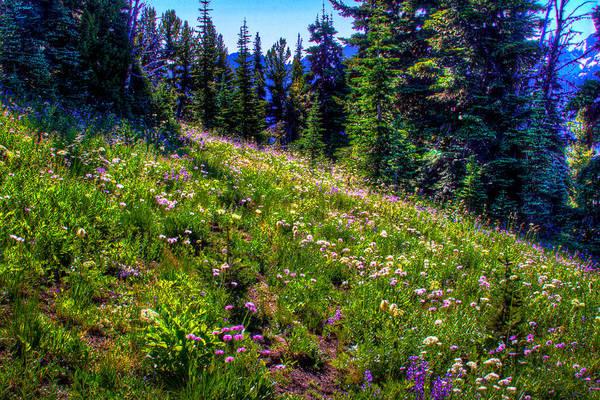 Photograph - Alpine Meadow Vi At Mount Rainier by David Patterson