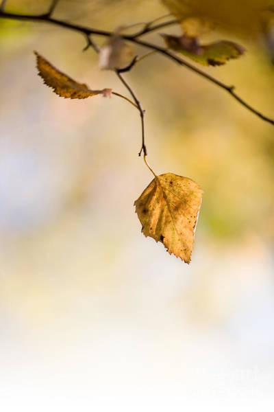 Wall Art - Photograph - Autumn by Kati Finell