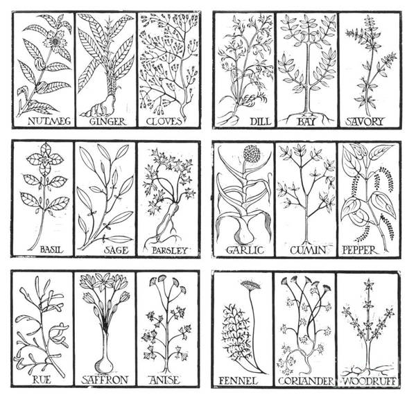 Photograph - Edible Herbs by Science Source