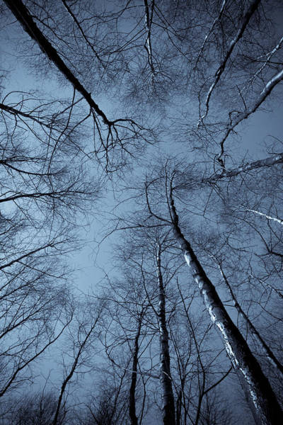 Epping Wall Art - Photograph - Epping Forest Trees by David Pyatt